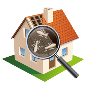 Termite Inspection Sherwood Inspection Services Llc
