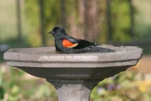 bird taking a bath